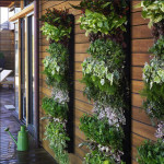Green your Wall with Vertical Garden Planters_3